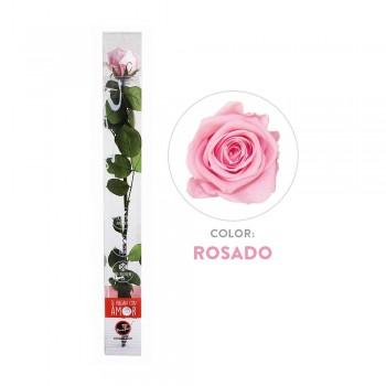 Rosa preservada rosa - Envío gratis en 24 horas