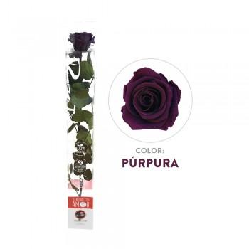 Rosa morada preservada - Envío gratis en 24 horas