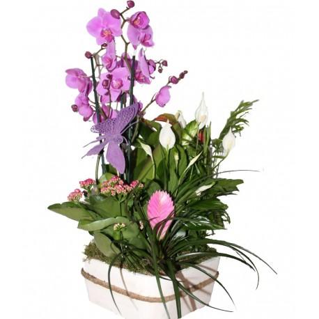 Centro de Flores Colonia