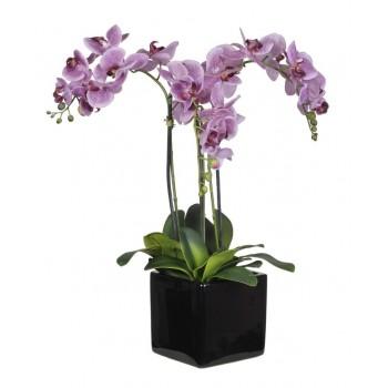 2 Orquídeas malva